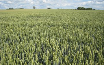 cereales-marchelepot-5337-basf